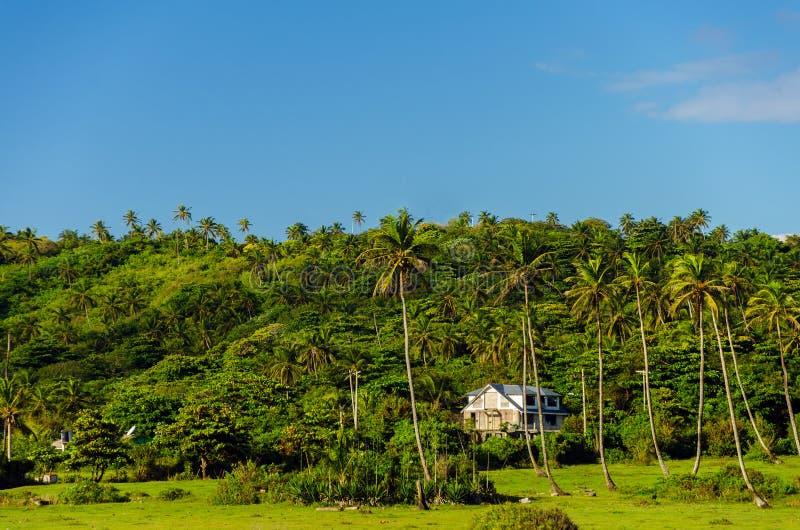 Зеленый холм с пальмами в San Andres, Колумбии стоковые фото