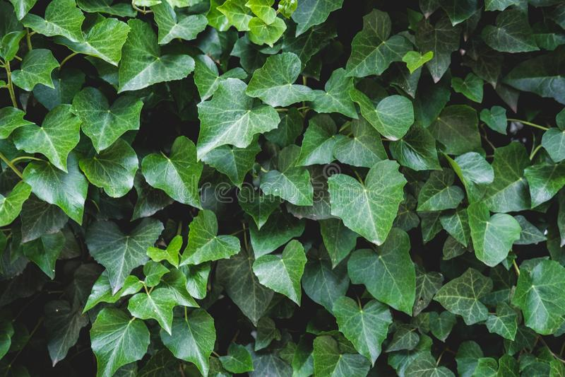 Зеленый цветочный узор листьев Естественная предпосылка сверху r стоковое изображение rf