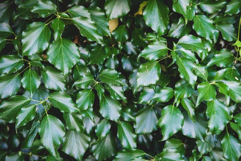 Зеленый цветочный узор листьев Естественная предпосылка сверху r стоковые изображения rf