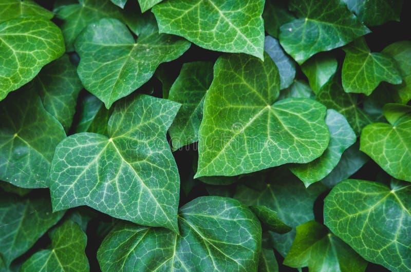 Зеленый цветочный узор листьев Естественная предпосылка сверху r стоковые фото