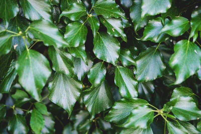 Зеленый цветочный узор листьев Естественная предпосылка сверху r стоковое изображение