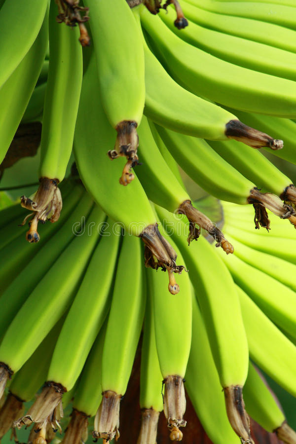 зеленый цвет банана стоковые изображения