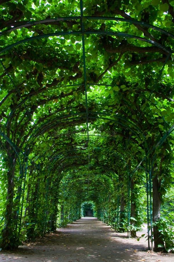зеленый цвет беседки стоковые фотографии rf