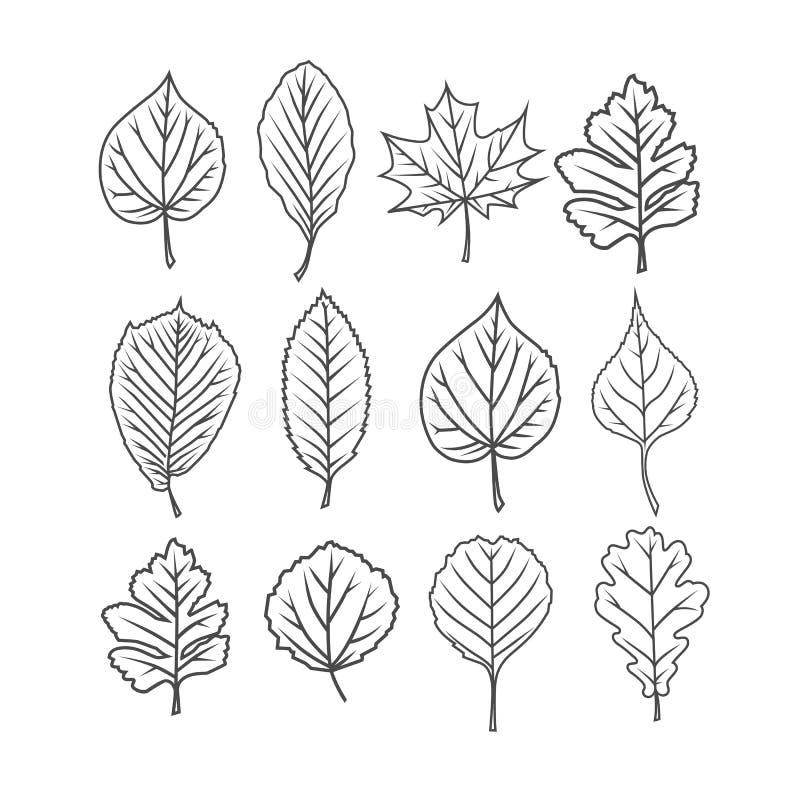 зеленый цвет ветвей выходит saplings вал иллюстрация вектора