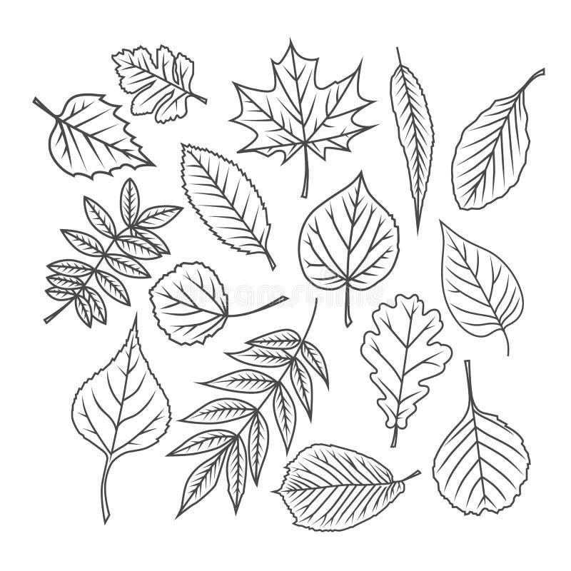 зеленый цвет ветвей выходит saplings вал иллюстрация штока