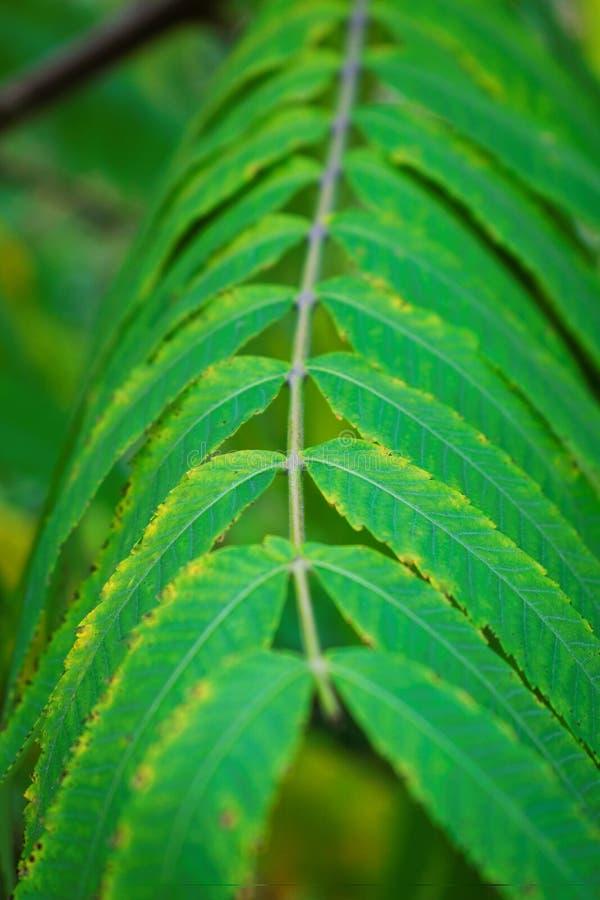 зеленый цвет ветви выходит вал стоковое изображение rf