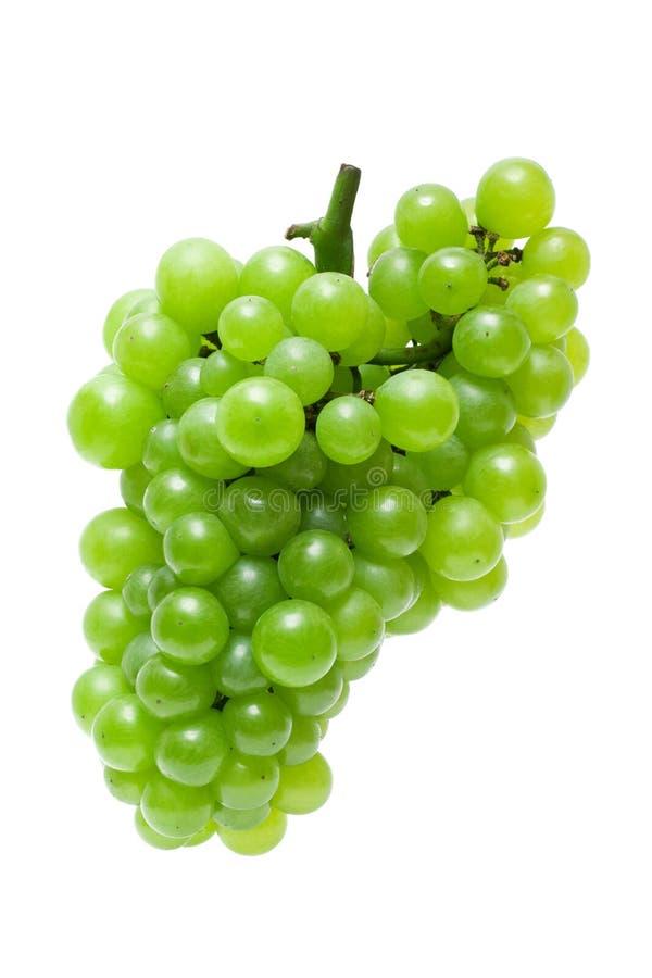 зеленый цвет виноградины стоковые изображения rf
