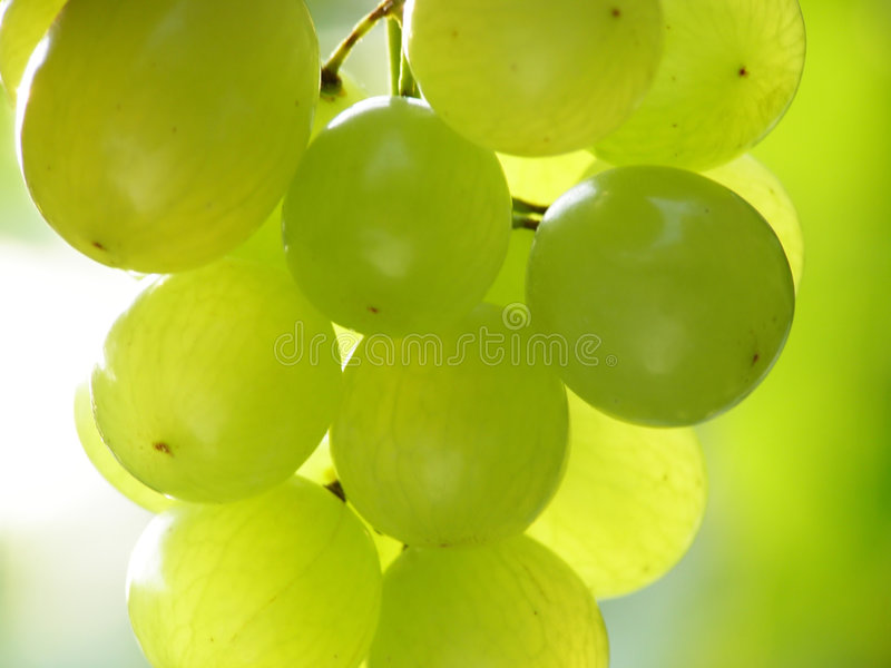 зеленый цвет виноградин стоковые фото