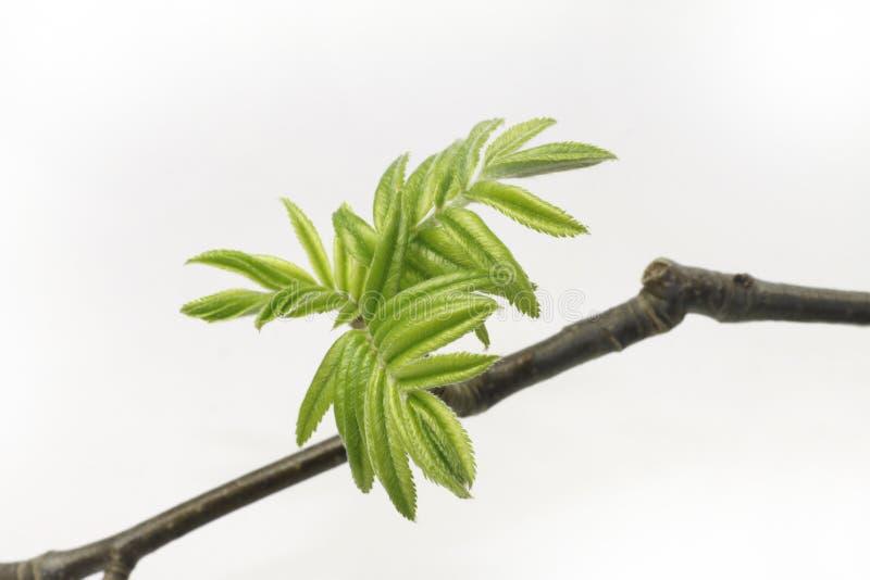 зеленый цвет выходит детеныши стоковое фото