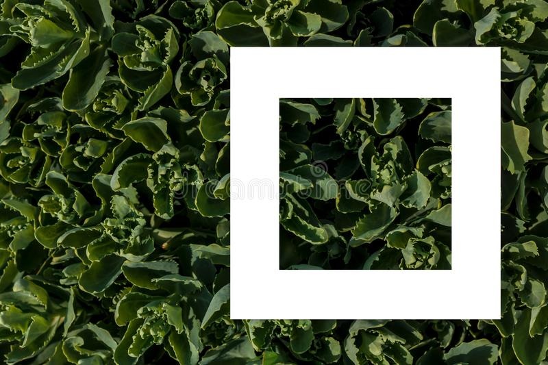 Зеленый цвет выходит как фон и белый лист бумаги для ярлыка стоковая фотография rf