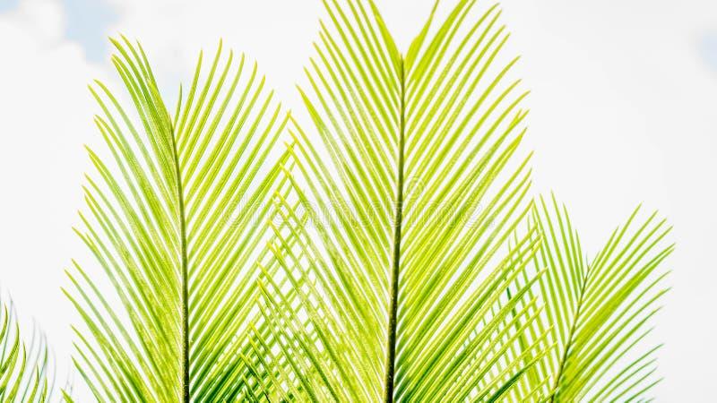 зеленый цвет выходит ладонь стоковые изображения rf