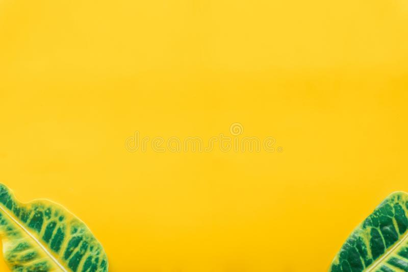 Зеленый цвет выходит минимальный на желтую предпосылку стоковая фотография