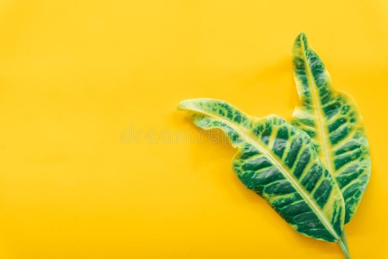 Зеленый цвет выходит минимальный на желтую предпосылку стоковые изображения rf