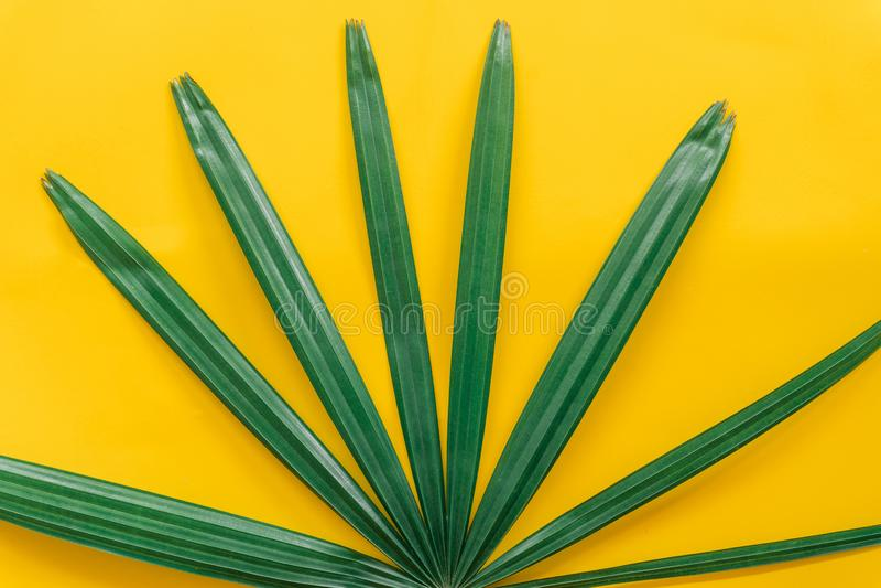 Зеленый цвет выходит минимальный на желтую предпосылку стоковая фотография rf