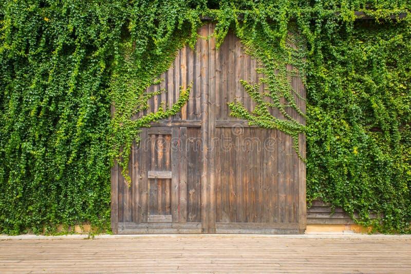 Зеленый цвет выходит на деревянные дверь или стену Славный для использования как backgrou стоковые фотографии rf