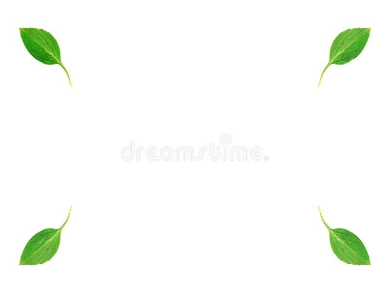 Зеленый цвет выходит на углы на белую предпосылку, разбивочный экземпляр-космос стоковые фотографии rf