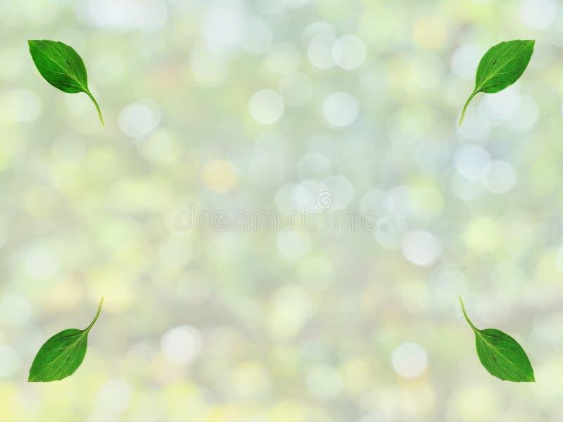 Зеленый цвет выходит на углы с зеленой предпосылкой bokeh от ветвей и листьев дерева нерезкости в лето стоковые изображения