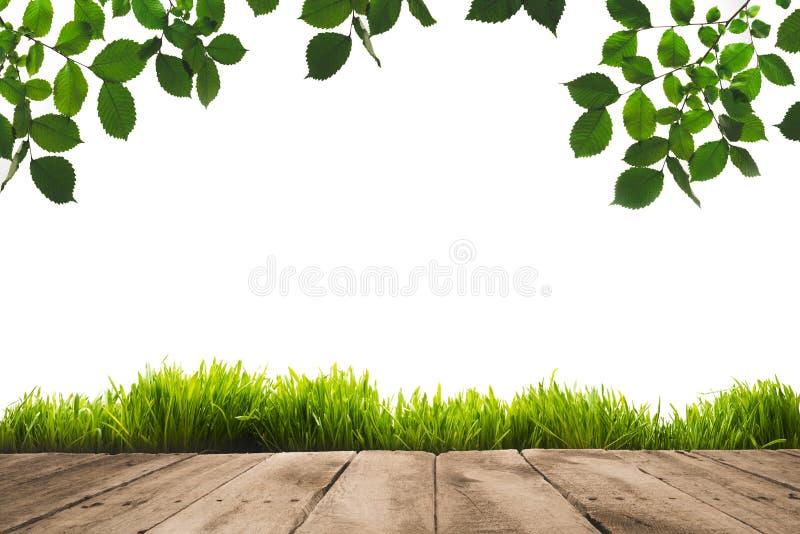 зеленый цвет выходит на хворостины, sward и деревянное стоковое изображение