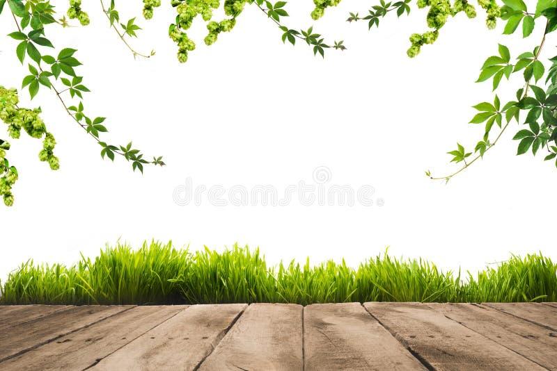 зеленый цвет выходит на хворостины, sward и деревянное стоковые фотографии rf