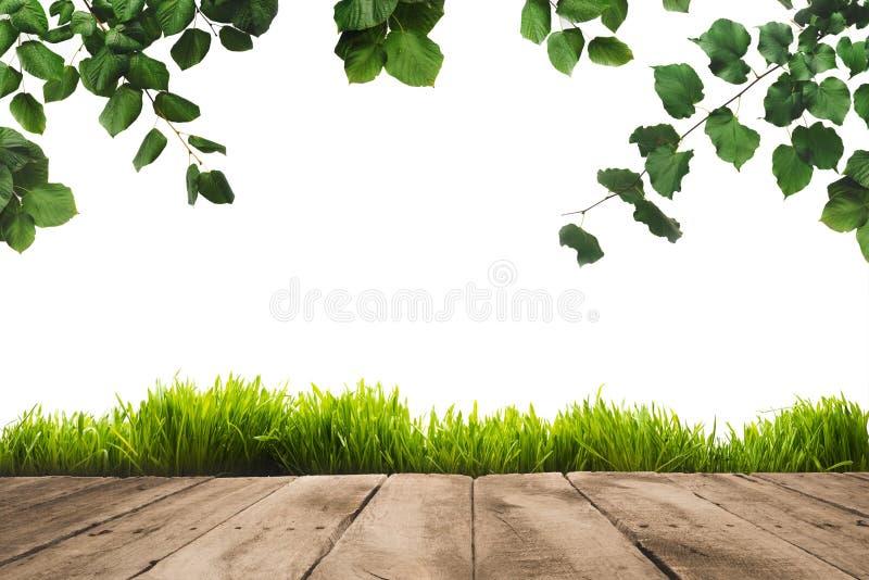 зеленый цвет выходит на хворостины, sward и деревянную предпосылку планок, стоковые фото