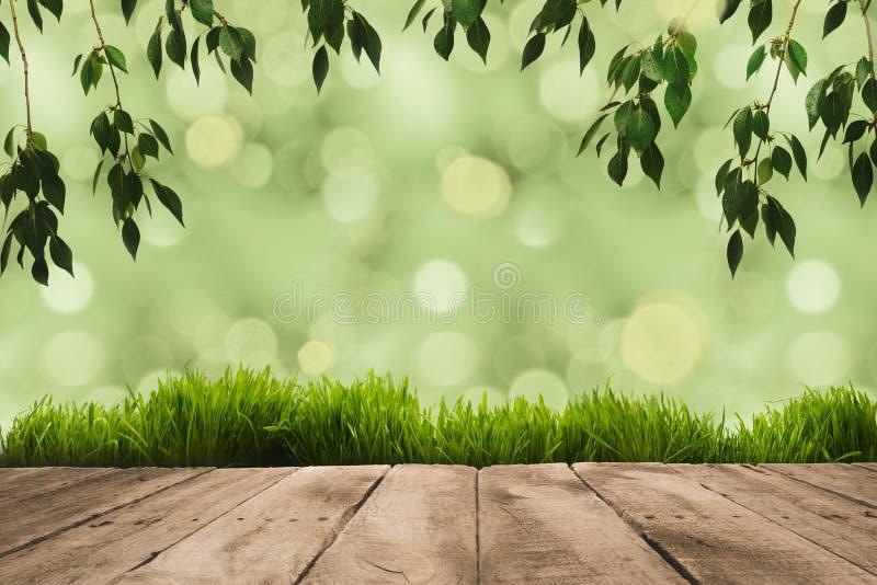 зеленый цвет выходит на хворостины, sward и деревянные планки с зеленым цветом стоковая фотография