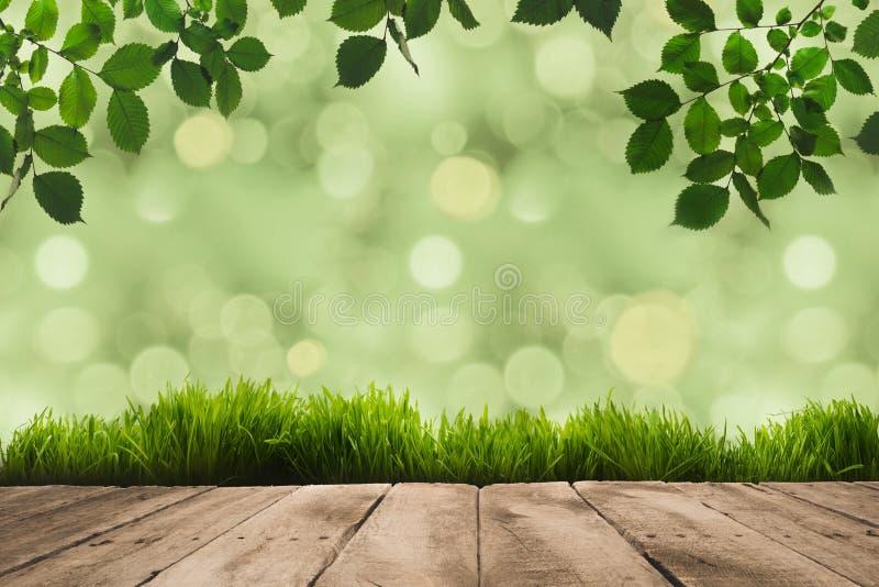 зеленый цвет выходит на хворостины, sward и деревянные планки с зеленым цветом стоковое фото rf