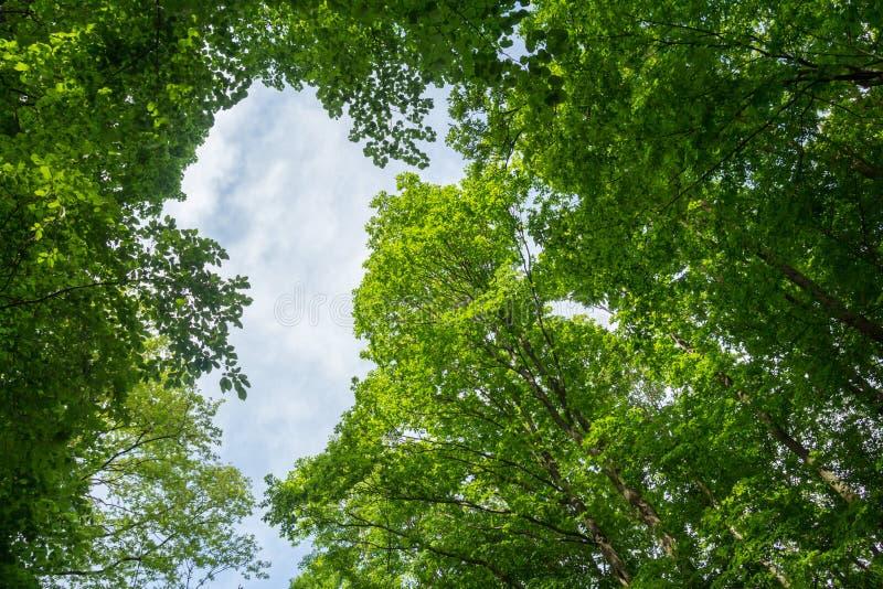 Зеленый цвет выходит сень дерева стоковая фотография