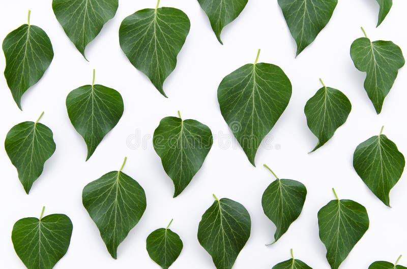 Зеленый цвет выходит текстура цветочного узора Плоское положение, взгляд сверху стоковое фото
