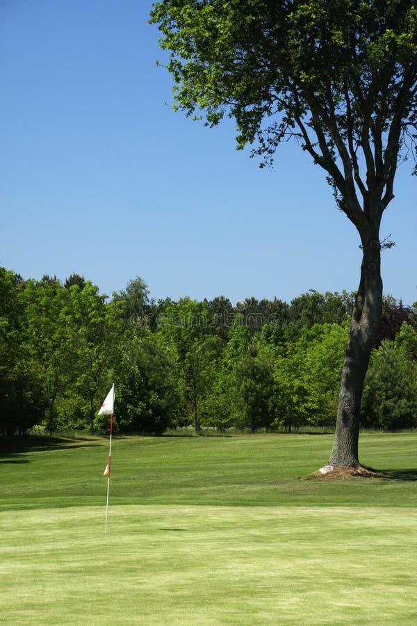 зеленый цвет гольфа стоковые фото