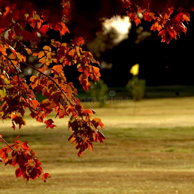 зеленый цвет золота падения выходит ближайше стоковое фото