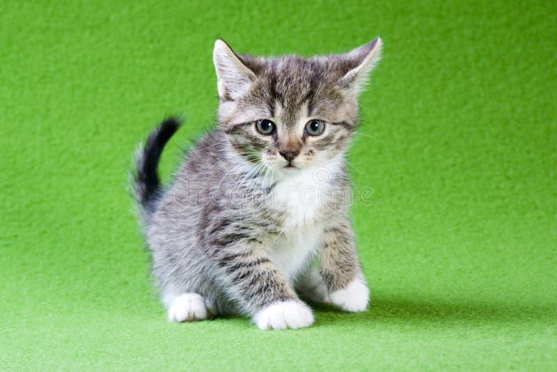 зеленый цвет изолировал striped лежать котенка стоковая фотография