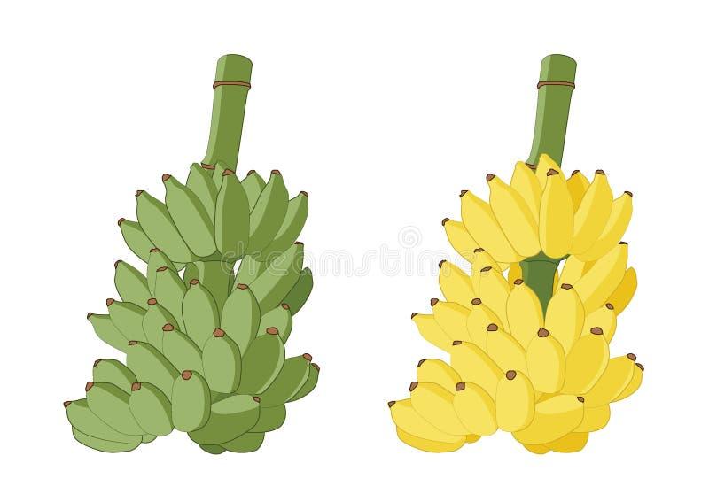 Зеленый цвет и желтый цвет банана на белой предпосылке бесплатная иллюстрация