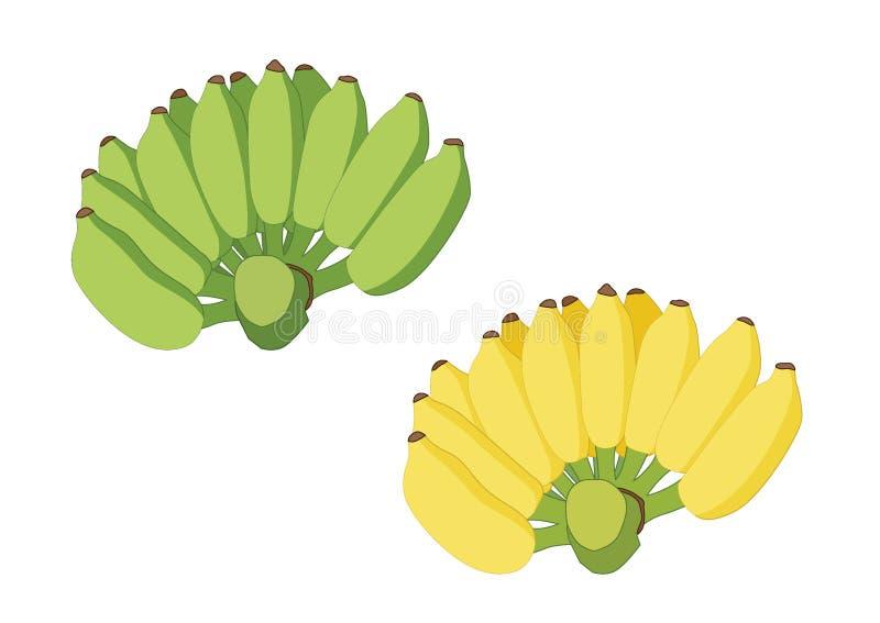 Зеленый цвет и желтый цвет банана на белой предпосылке иллюстрация вектора