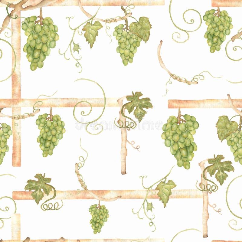 Зеленый цвет красивой руки акварели вычерченный безшовный и желтая картина с ветвями и листьями виноградин r бесплатная иллюстрация