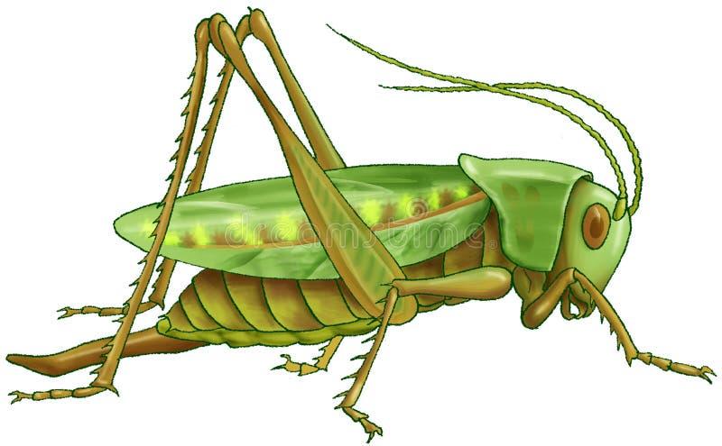 зеленый цвет кузнечика иллюстрация штока
