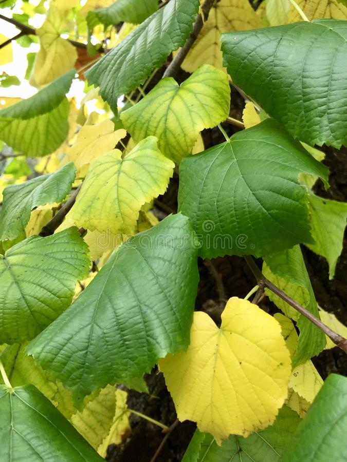 Зеленый цвет лист стоковая фотография