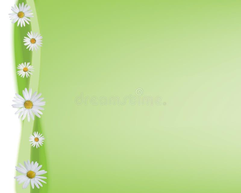 зеленый цвет маргариток предпосылки иллюстрация вектора