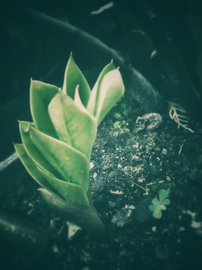 Зеленый цвет младенца стоковое фото rf
