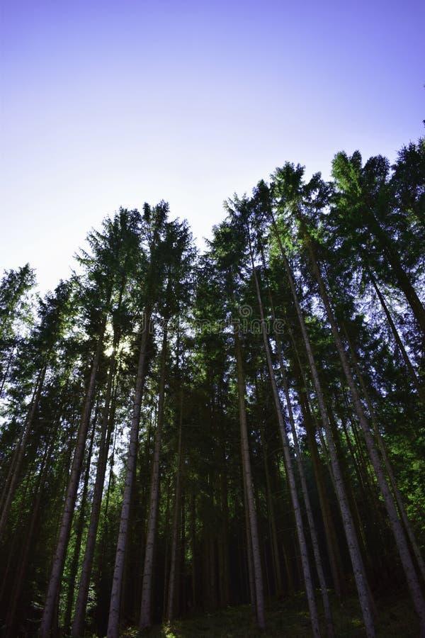 Зеленый цвет от деревьев стоковые изображения rf