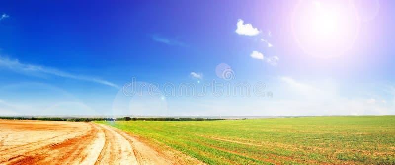 зеленый цвет полей стоковое изображение