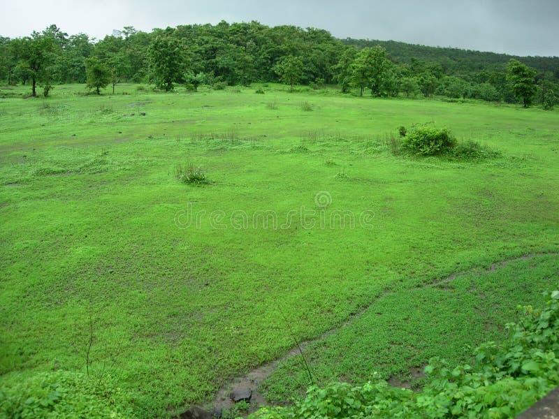 зеленый цвет поля сельской местности стоковые изображения rf