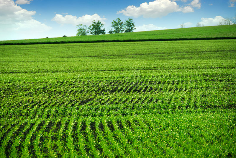 зеленый цвет поля фермы стоковые изображения