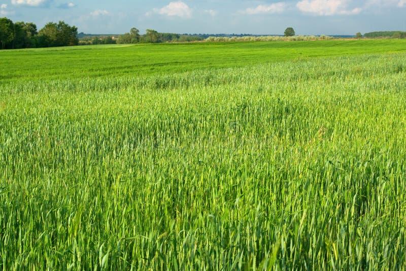 зеленый цвет поля стоковое изображение rf