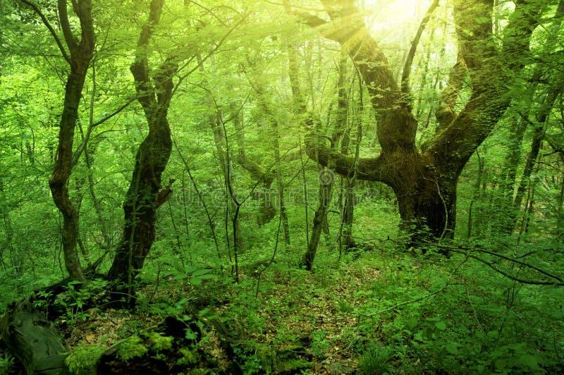 зеленый цвет пущи стоковая фотография