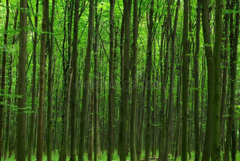 зеленый цвет пущи стоковые изображения