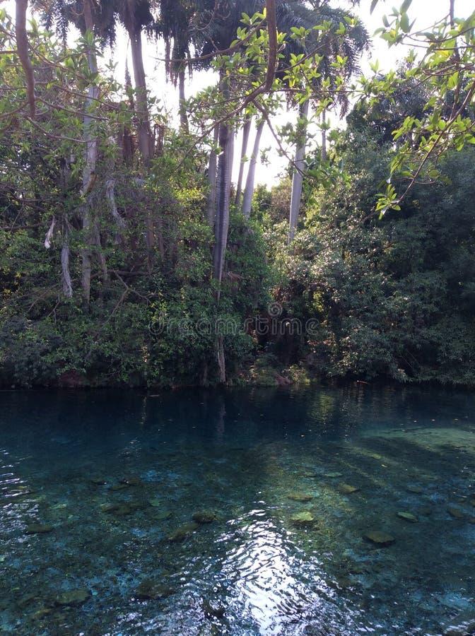 Зеленый цвет реки стоковые фотографии rf