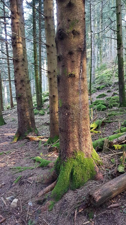 Зеленый цвет Солнця леса дерева стоковые фотографии rf