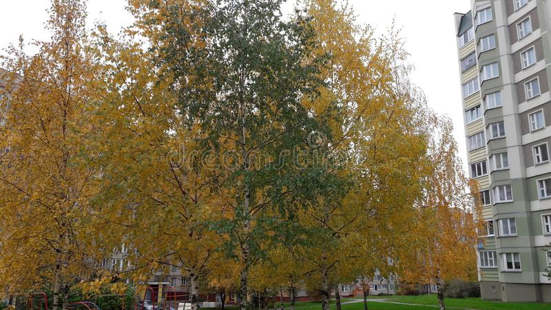 зеленый цвет среди желтого цвета стоковое изображение