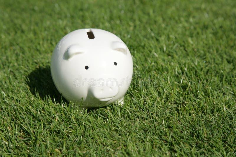 зеленый цвет травы банка piggy стоковые фотографии rf