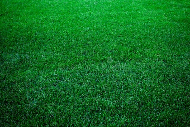 зеленый цвет травы предпосылки стоковые изображения rf